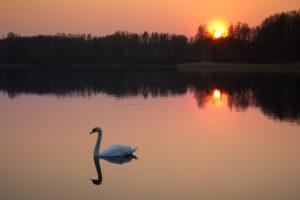 Ilsa Burns Health Coach - Swan on Lake