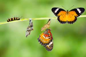 Painless Change - caterpillar to butterfly